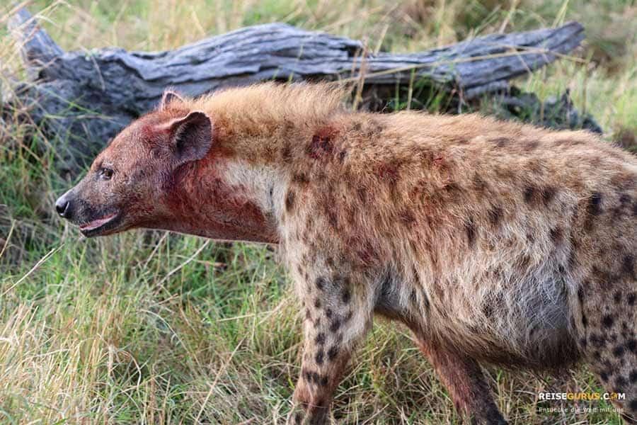 Masai Mara Highlight
