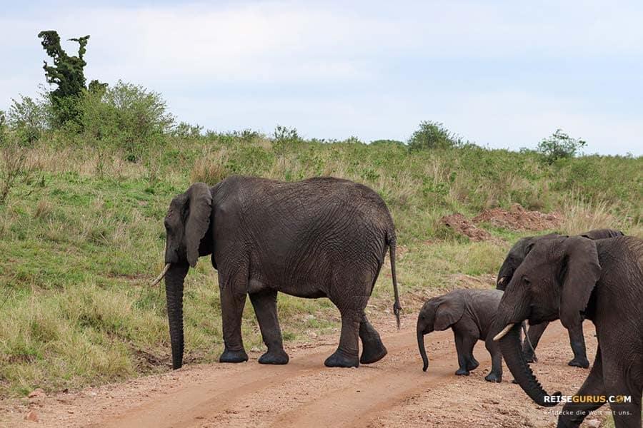 Masai Mara Safari Highlight