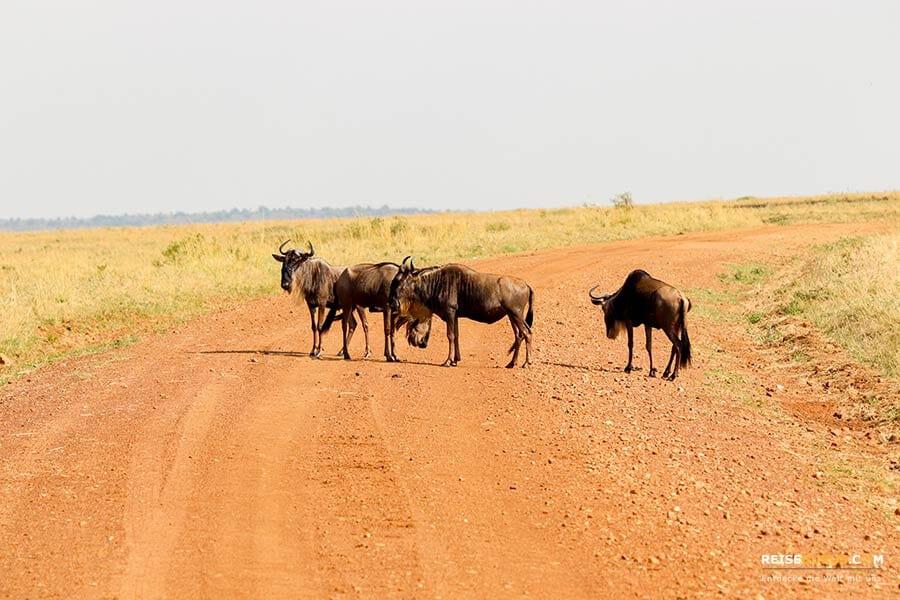 Masai Mara in Kenia Afrika
