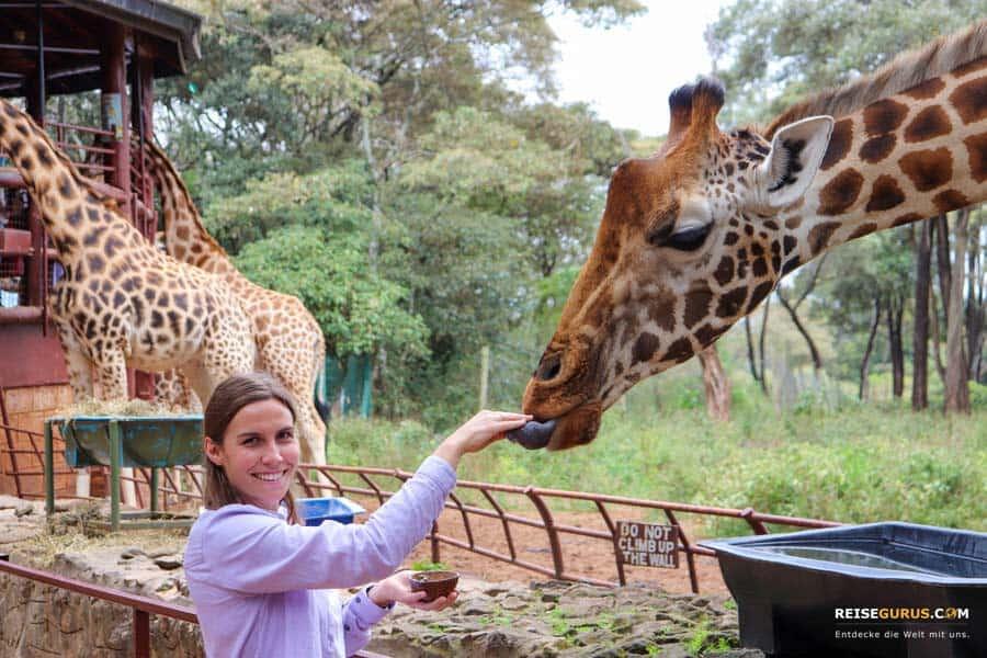 Nairobi Sehenswürdigkeiten Giraffe-Center