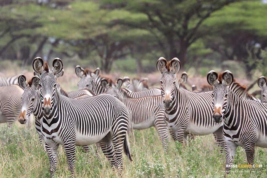 Samburu Nationalpark Kenia