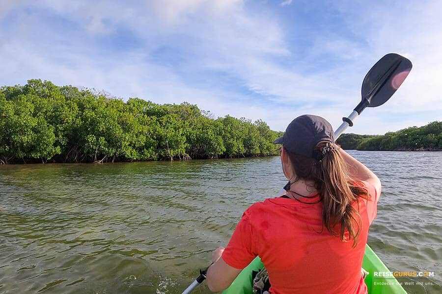 Kayak in die Mangroven