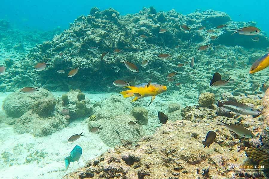 Bonaire Schnorchelspots