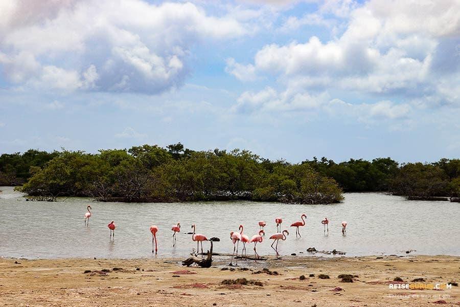 Slagbaai Nationalpark Bonaire